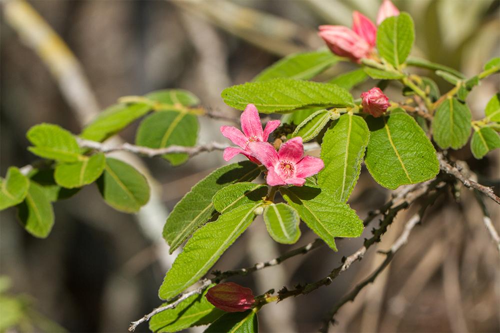 island conservation caribbean flora