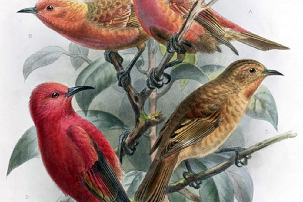 island-conservation-getty-image-honeycreeper