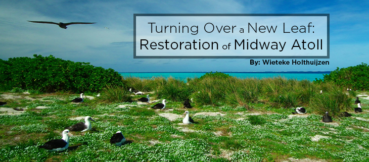 island conservation preventing extinctions midway atoll restoration feat