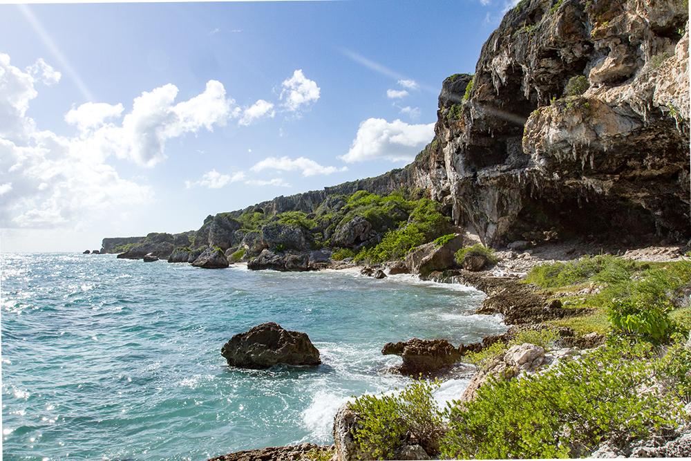 island conservation mona