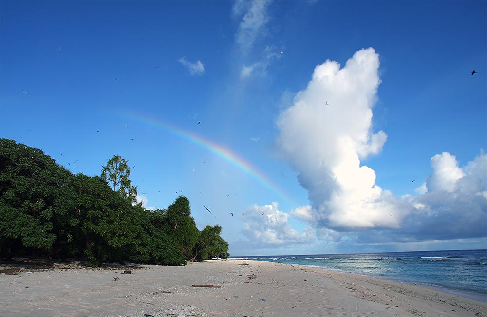 island conservation preventing extinctions palau landscape