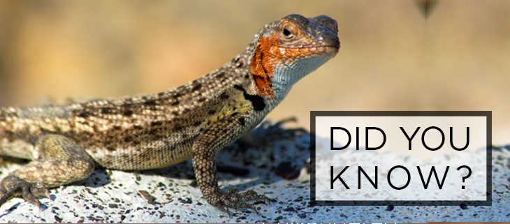 island conservation reptile facts feat