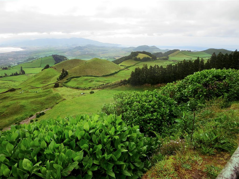 island-conservation-sao-miguel-island