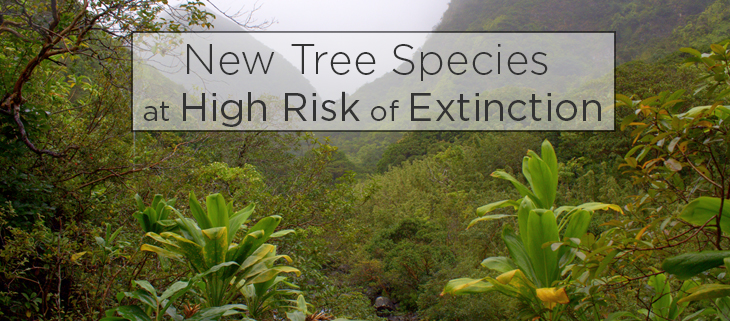Island-conservation-critically-endangered-hawaiian-tree