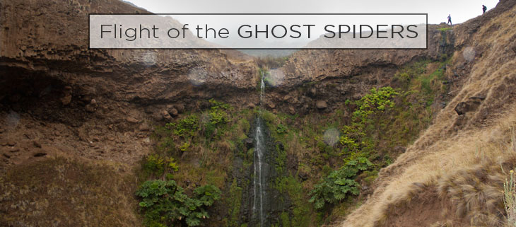 island conservation ghost spiders