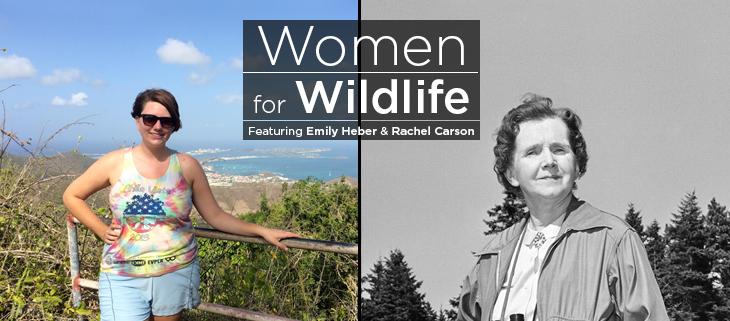island conservation emily heber rachel carson