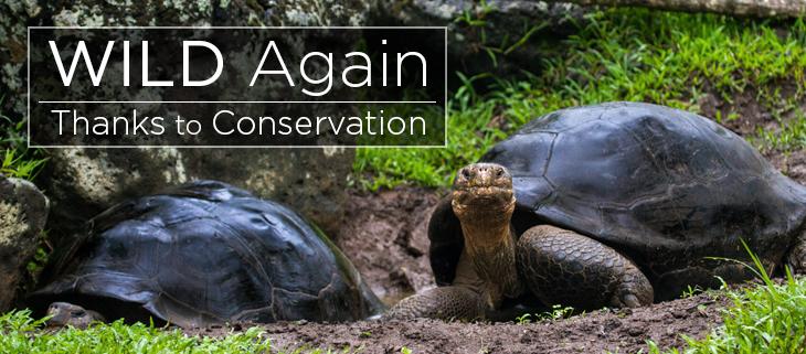 island conservation galápagos tortoise