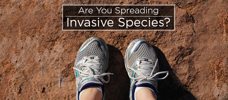island conservation invasive species