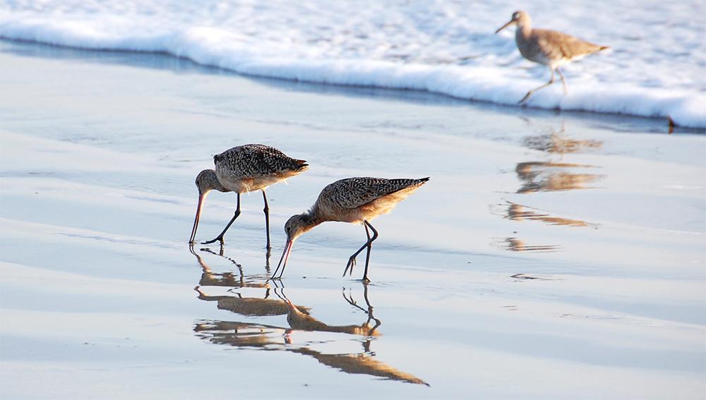 island conservation mexico biosphere reserve seabirds