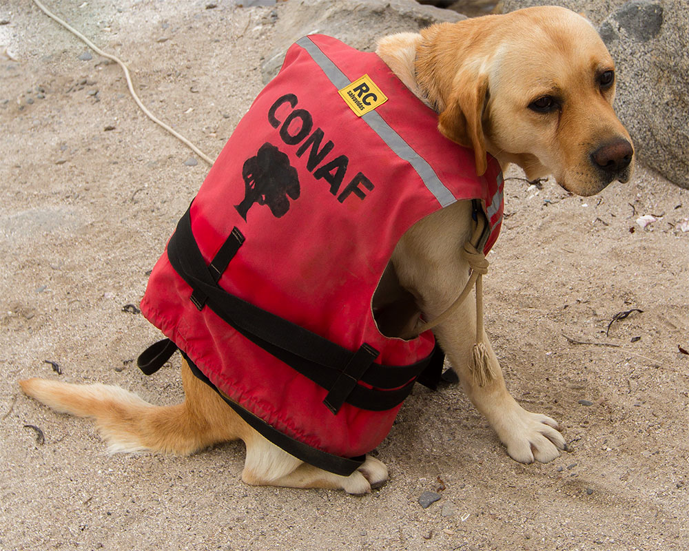 Island Conservation Island Detection Dogs