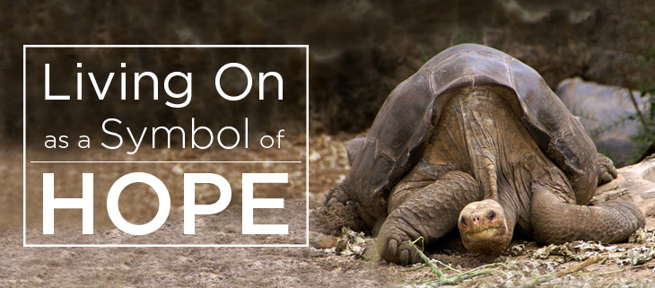 island conservation lonesome george