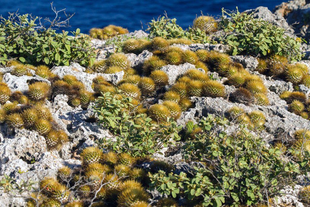 island conservation mona island scrub