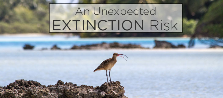 island conservation preventing extinctions numeniini family feat