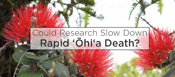 island conservation preventing extinctions rapid ohia death ohia