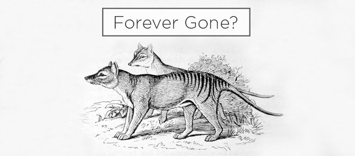 island conservation preventing extinctions tasmanian tiger