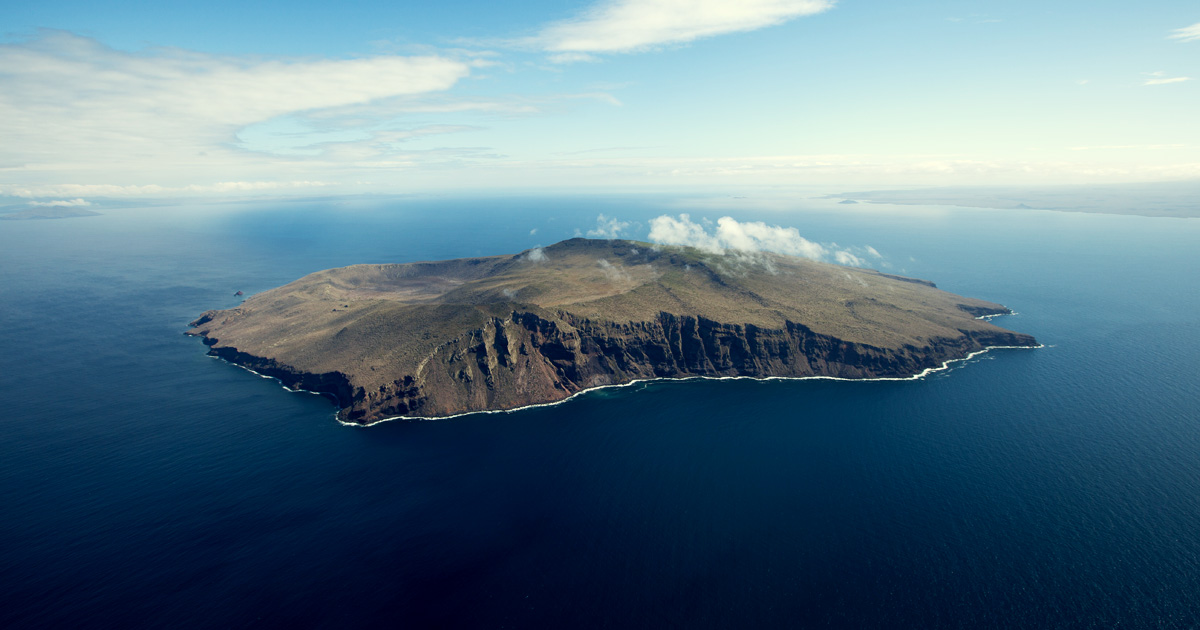 island conservation preventing extinctions
