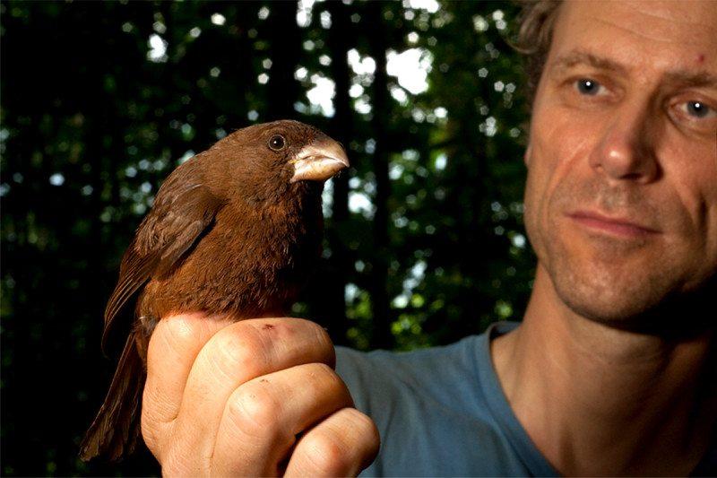 island conservation canary São Tomé Island
