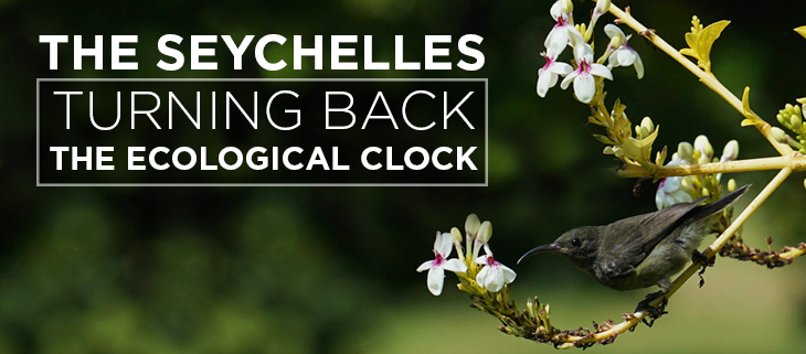 Island-Conservation-Preventing-Extinctions-Seychelles-Award-Seychelles-feat