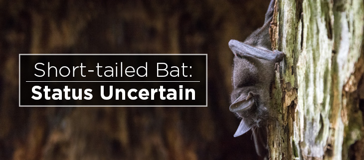Island-conservation-preventing-extinctions-new-zealand-lesser-short-tailed-bat-feat