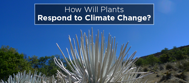island-conservation-preventing-extinctions-Haleakala-Silversword-feature