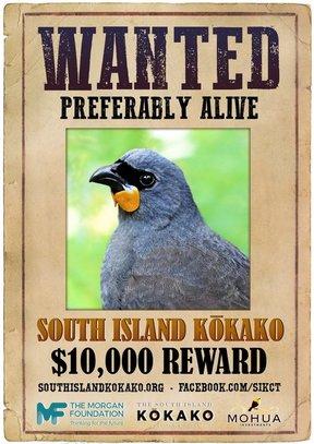 island conservation South Island Kokako poster