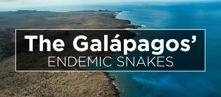 island-conservation-preventing-extinctions-galapagos-snakes-feat