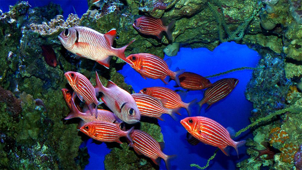 island-conservation-hawaii-sustainability-initiative-hawaiian-reef