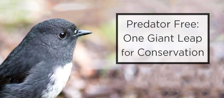 island-conservation-predator-free-feat