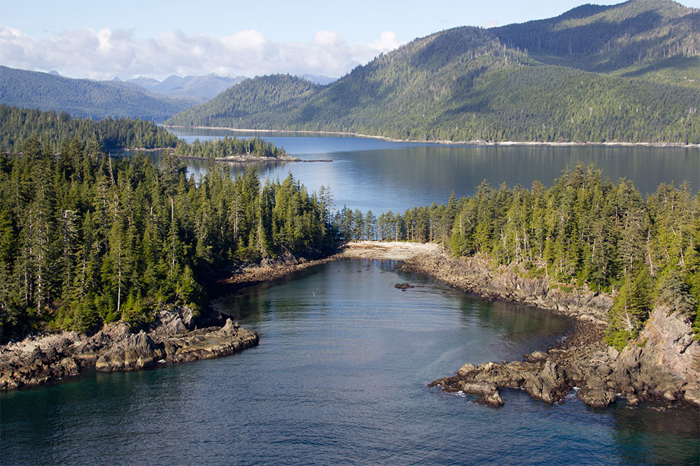 island-conservation-preventing-extinctions-community-ecology-invasive-species-haida-gwaii