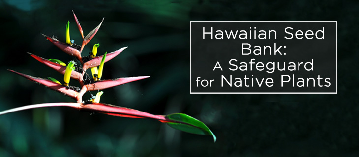 island-conservation-hawaii-seedbank-feat