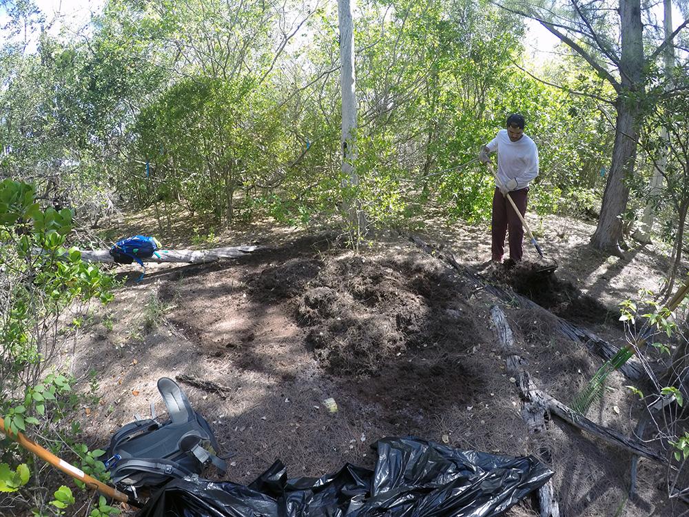 island-conservation-preventing-extinctions-mona-island-iguanas-fieldwork-raking