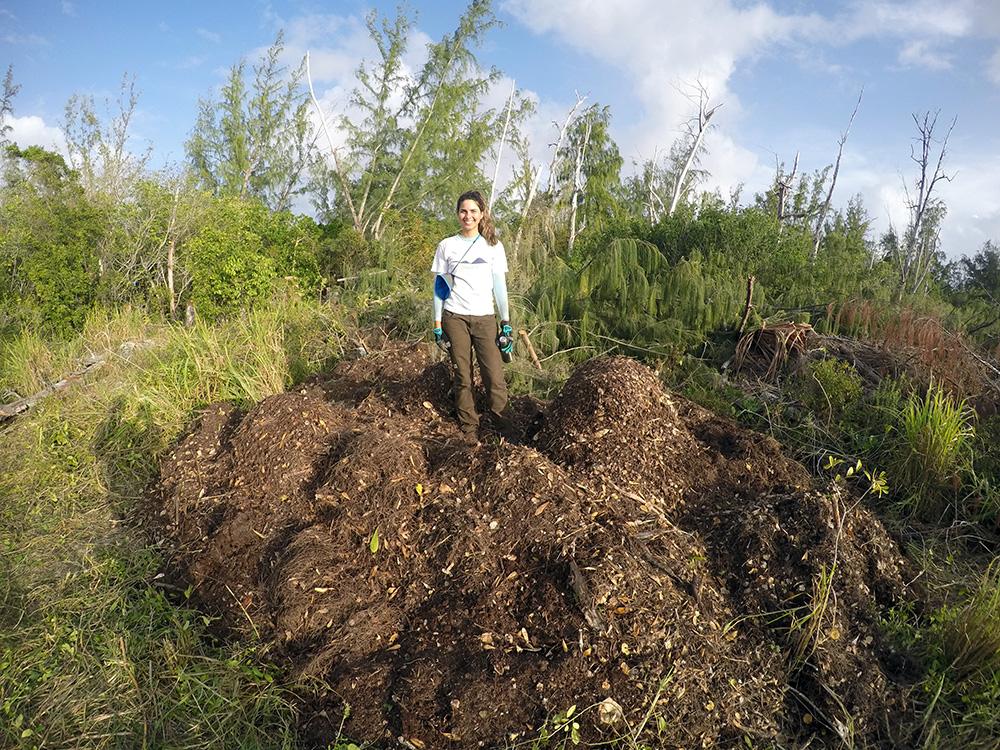 island-conservation-preventing-extinctions-mona-island-iguanas-restoration-debris isla de mona