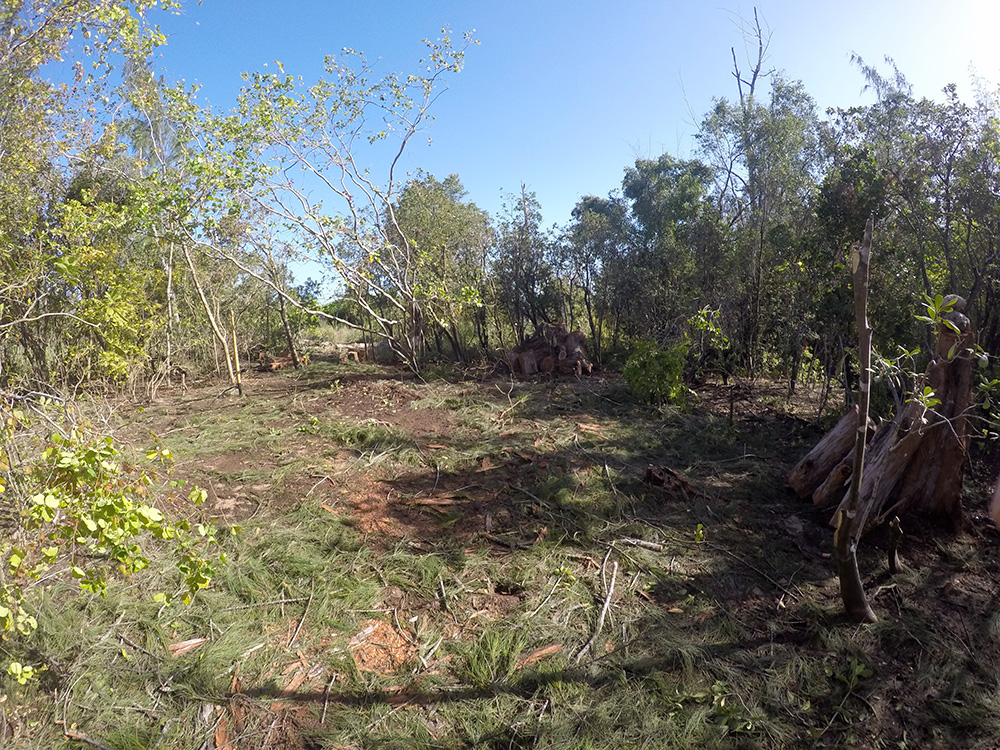 island-conservation-preventing-extinctions-mona-island-iguanas-restoration-plot