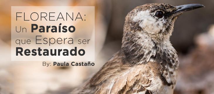 island-conservation-paula-floreana-mockingbird-feat-spanish