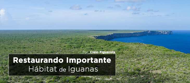 island-conservation-preventing-extinctions-restoring-mona-island-iguana-habitat-feat-espanol