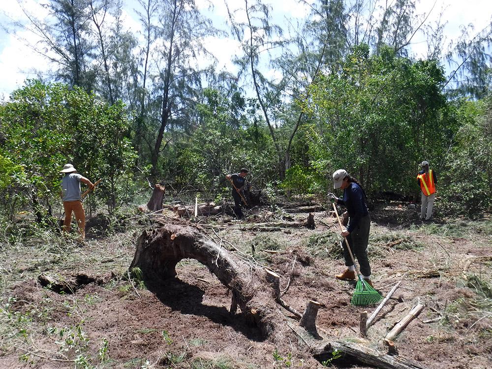 island-conservation-restoring-mona-island