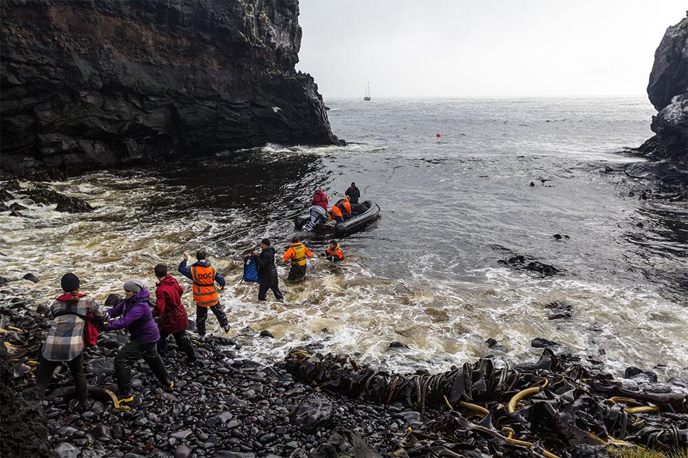 island-conservation-preventing-extinctions-seabirds-field-staff