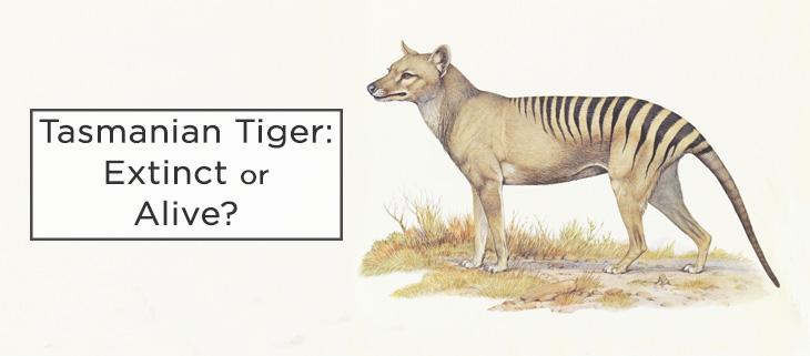 island-conservation-tasmanian-tiger-feat