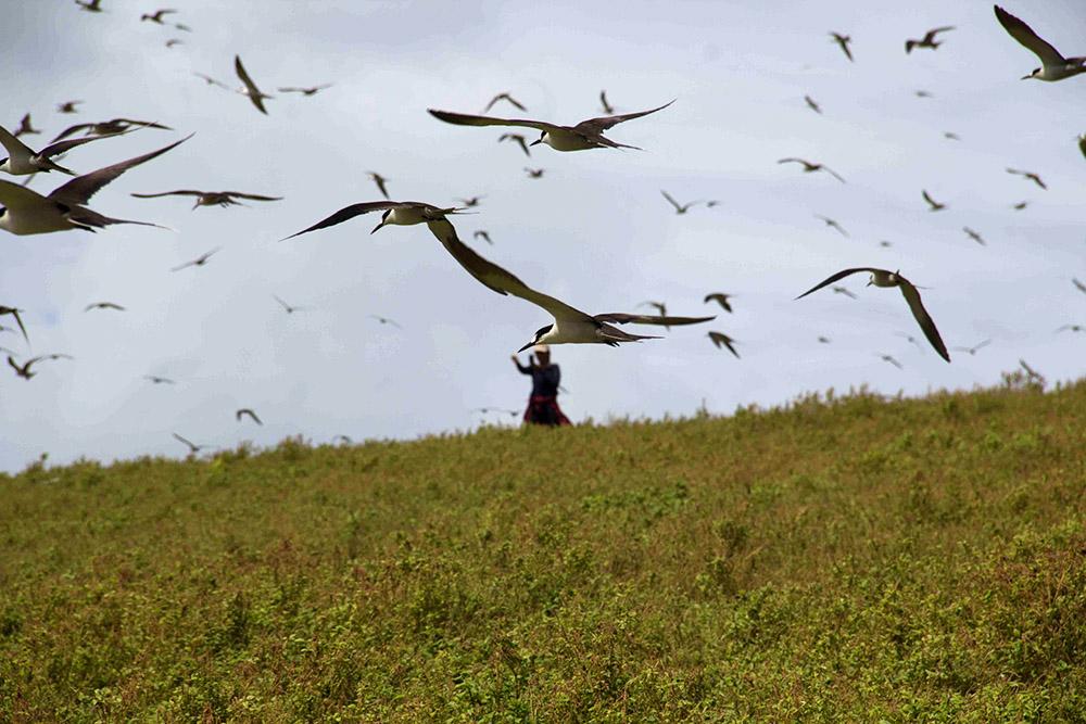 island-conservation-teuaua-marquesas-birds-fly jason zito