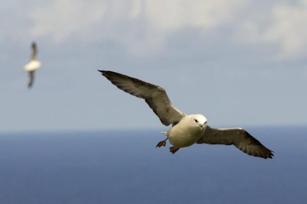 island-conservation-saint-kilda-island