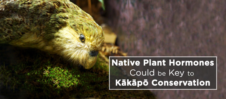 island-conservation-Kākāpō-hormone-plant-feat