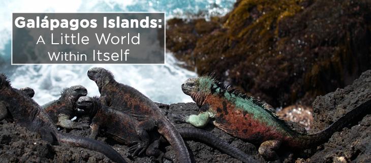 island-conservation-galapagos-marine-iguana-feat