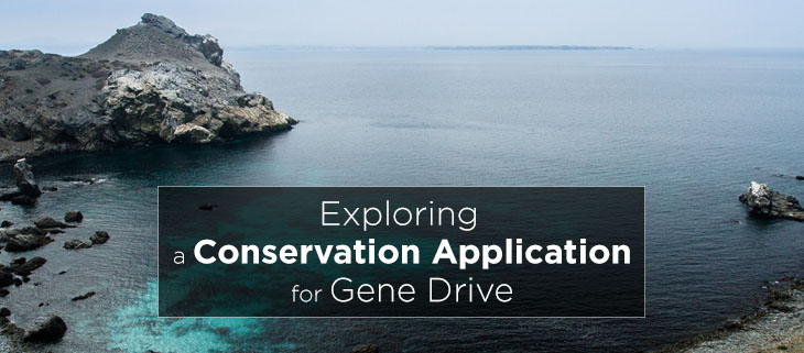 island-conservation-preventing-extinctions-gene-drive-the-scientist-feat
