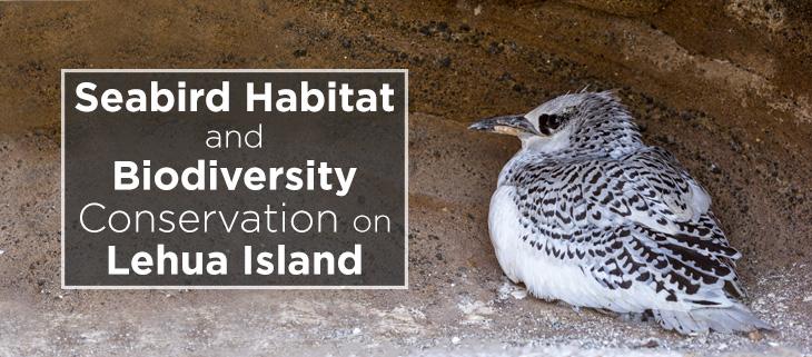 island-conservation-lehua-island-seabird-biodiversity-feat