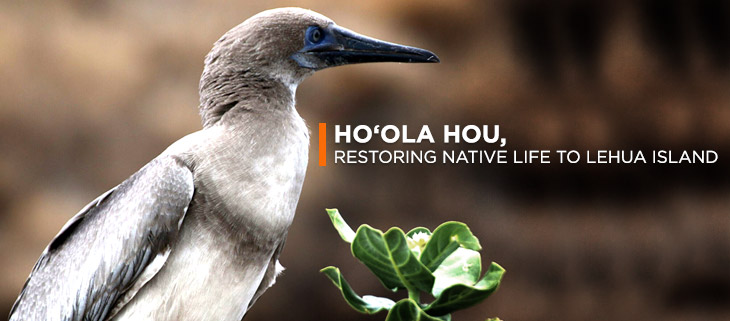 island conservation lehua island hawaii