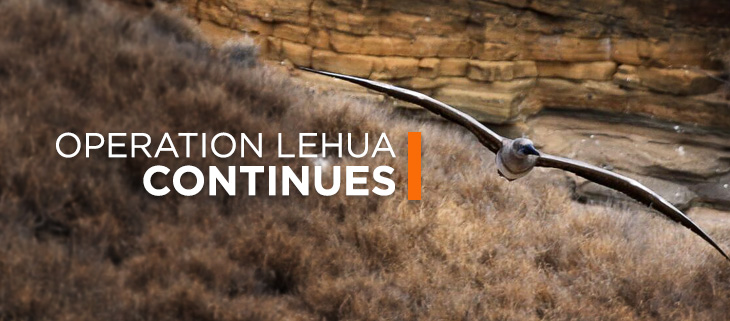 island conservation lehua island hawaii diphacinone