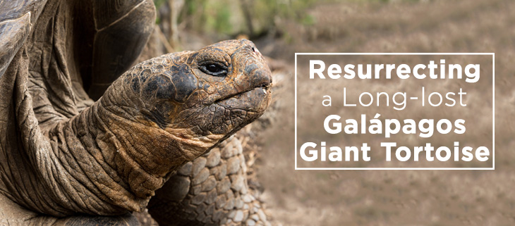 island-conservation-floreana-island-galapagos-tortoise-feat