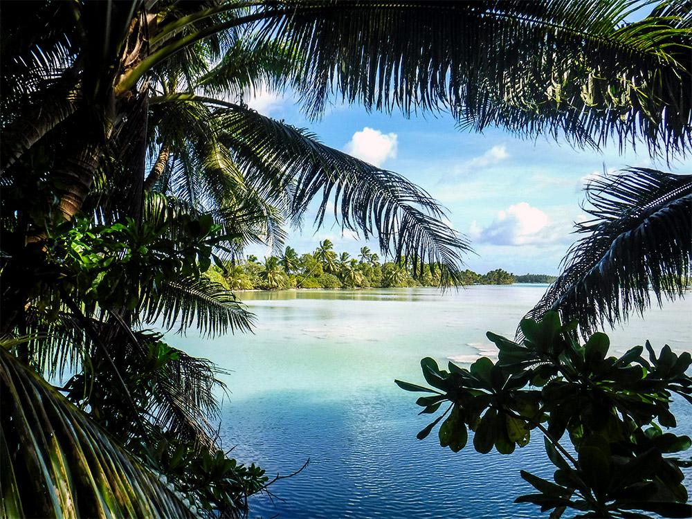 island-conservation-gene-drive-palmyra