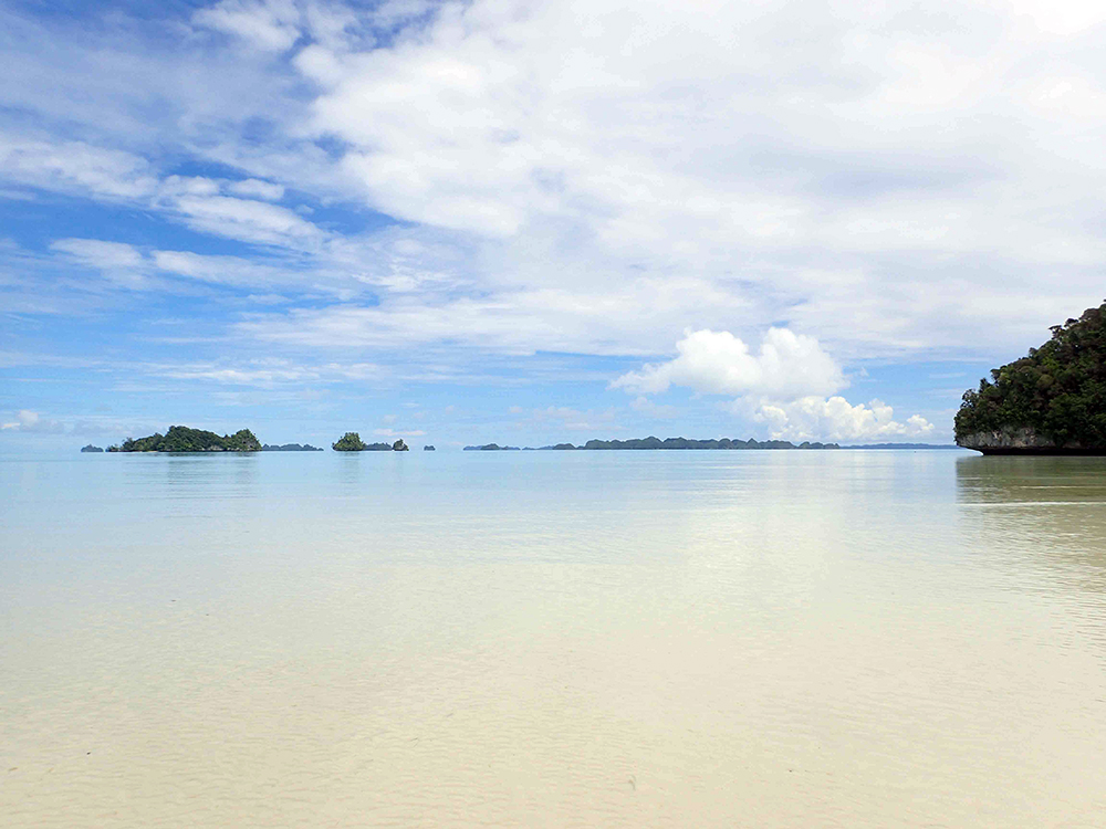 island-conservation-preventing-extinctions-palau-horizon
