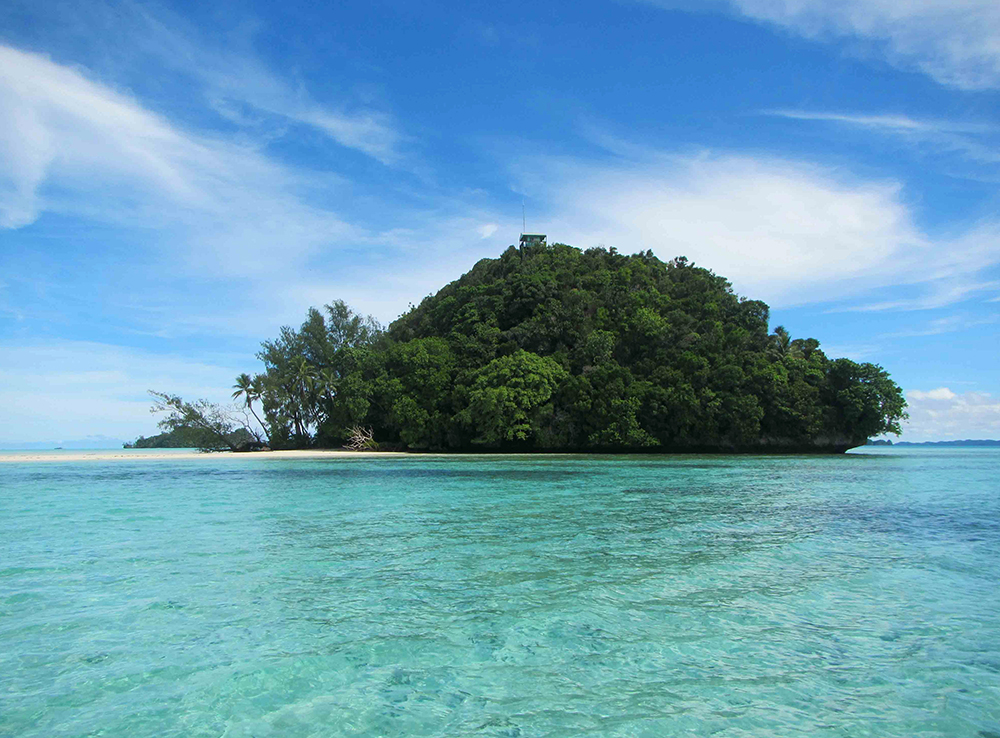 island-conservation-preventing-extinctions-palau-limestone-vegetation